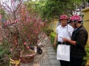 Một mùa Tết buồn với nhiều người bán hoa