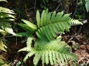 Phát hiện mới trong năm về loại cây mọc hoang giúp khỏe thận, giảm hẳn tiểu đêm sau 1 tháng