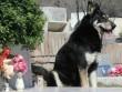 Chú chó trung thành nhất nhì thế giới đã qua đời