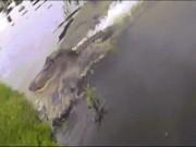 Cá sấu khổng lồ lao như bắn lên bờ cướp cá của người câu
