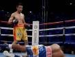 Chung kết quyền Anh WBC hạng ruồi: Ngôi sao người Thái Lan sẽ toả sáng?