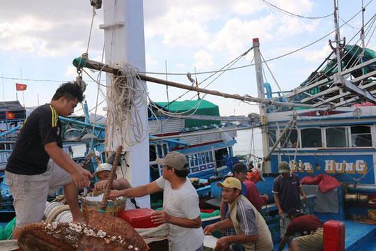 Ngư dân Ninh Thuận trúng đậm cá cơm sau Tết - 2