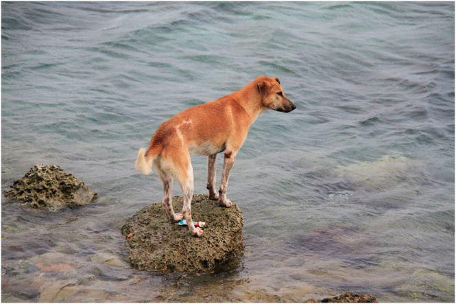 Chú chó tên Sơn Tùng nổi tiếng ở Trường Sa - 10