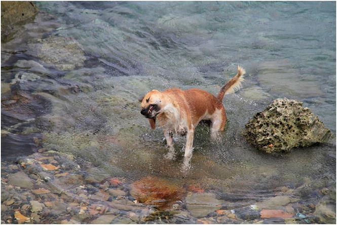 Chú chó tên Sơn Tùng nổi tiếng ở Trường Sa - 6