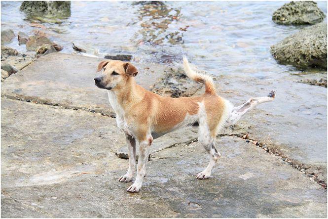 Chú chó tên Sơn Tùng nổi tiếng ở Trường Sa - 7