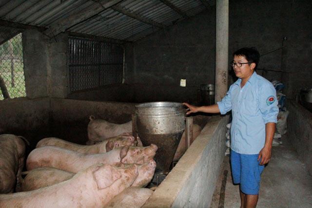 Làm giàu ở nông thôn: Trai trẻ 8X bỏ nghề báo về quê nuôi lợn, gà - 2
