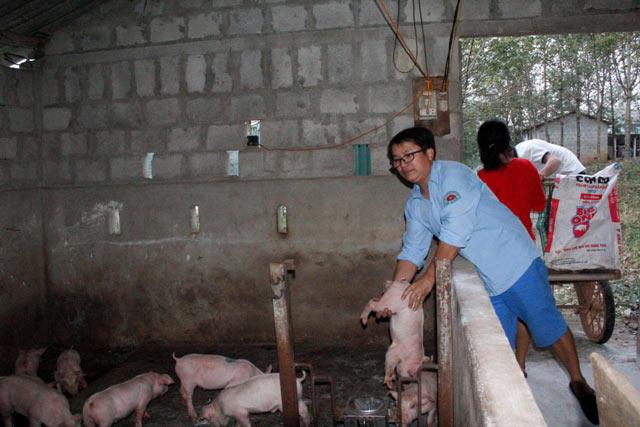 Làm giàu ở nông thôn: Trai trẻ 8X bỏ nghề báo về quê nuôi lợn, gà - 3