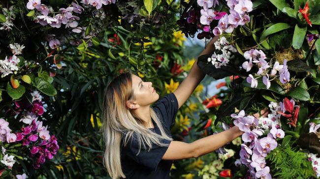 Nhân viên chăm sóc hoa trước lễ hội phong lan 2018 diễn ra tại khu vườn Kew ở London, Anh.