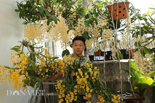 """9X """"già"""" cùng kinh nghiệm trồng tỉa lan thủy tiên, kim điệp ra hoa bừa chỏm - 1"""