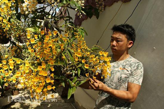 """9X """"già"""" cùng kinh nghiệm trồng tỉa lan thủy tiên, kim điệp ra hoa bừa chỏm - 3"""