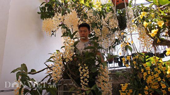 """9X """"già"""" cùng kinh nghiệm trồng tỉa lan thủy tiên, kim điệp ra hoa bừa chỏm - 4"""