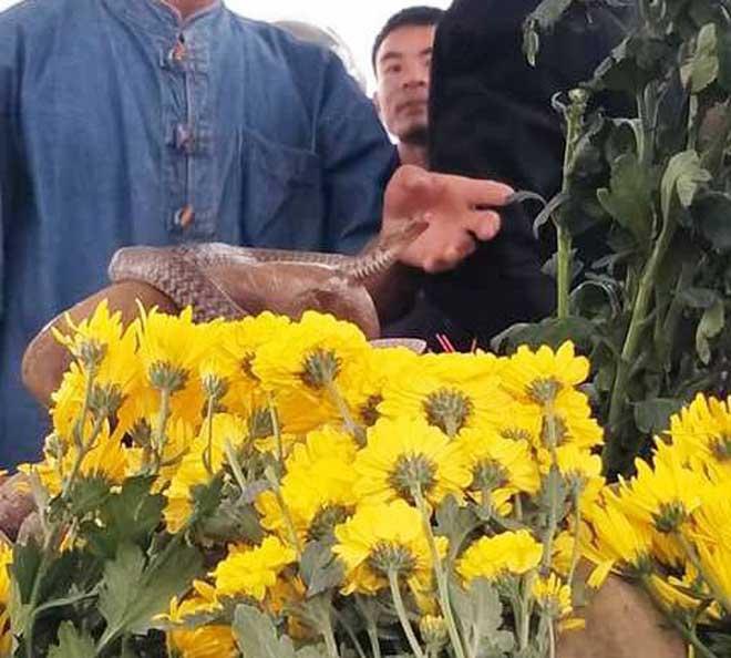 """Dân ùn ùn xem mẹ con """"rắn thần"""" xuất hiện trên mộ vô danh - 4"""