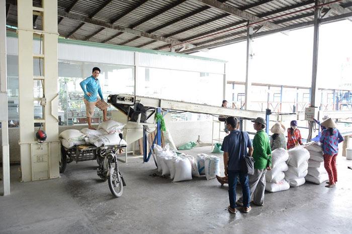Trung Quốc ngưng mua gạo của 3 ông lớn vì… hạt cỏ - 1