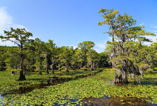 Hồ Caddo: Nằm ở phía đông Texas, hồ Caddo nổi bật với những hàng cây bách xoắn của Tây Ban Nha được trồng trên vùng đất ngập nước, hồ này chỉ đi được bằng thuyền kayak. Hồ được tạo ra từ năm 1100 đến năm 1200 sau công nguyên - đây là một trong những hồ nước tự nhiên được hình thành ở Texas.