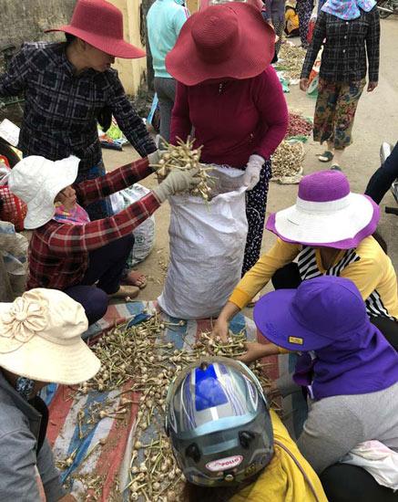 """Chở tỏi tươi nơi khác về đảo """"dán mác"""" trồng tại Lý Sơn bán giá cao - 2"""