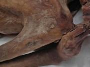 Xác ướp 5.200 năm tuổi có hình xăm quyền lực, cổ nhất thế giới