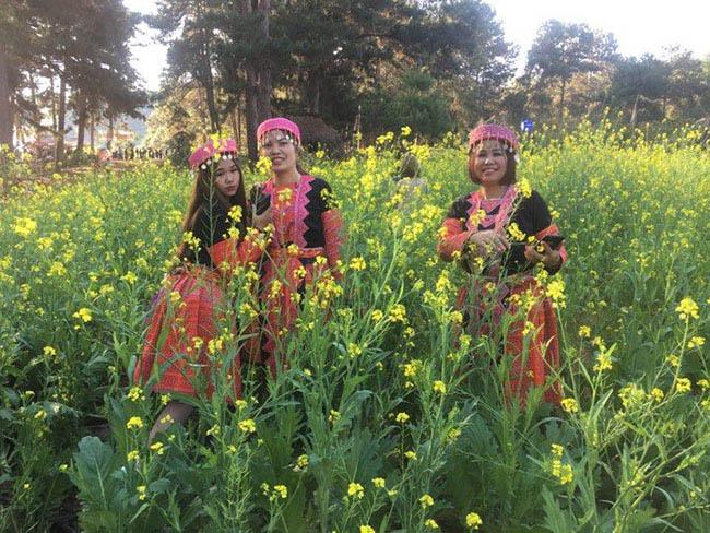Mãn nhãn ngắm nhìn vườn hoa cải vàng óng trên cao nguyên Mộc Châu - 4