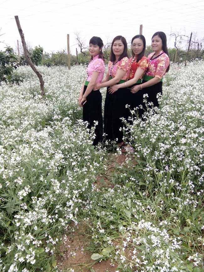Mãn nhãn ngắm nhìn vườn hoa cải vàng óng trên cao nguyên Mộc Châu - 9