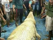 Mổ bụng cá sấu khổng lồ dài 6m, đau xót khi nhìn thấy bên trong