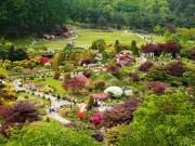 Bạn có biết Lễ hội Hoa Xuân tại Hàn Quốc?