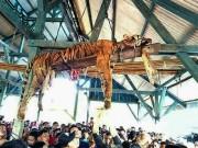 Indonesia: Hổ quý hiếm lẻn vào làng, bị lột da, chặt xác dã man