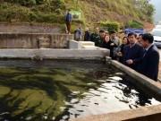 """Thị trường - Tiêu dùng - Làm ăn lạ: Nuôi 8.000 cá đặc sản trên núi cao, tiền """"đổ"""" về ùn ùn"""