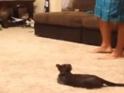 """Những con mèo mang lá gan  """" chuột nhắt """""""
