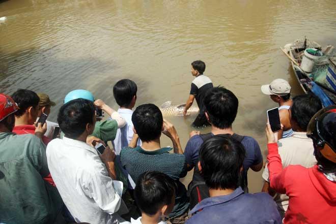 """Theo chân thợ săn cá """"khủng"""", từng 2 lần được lộc trời ban ở Sài Gòn - 19"""
