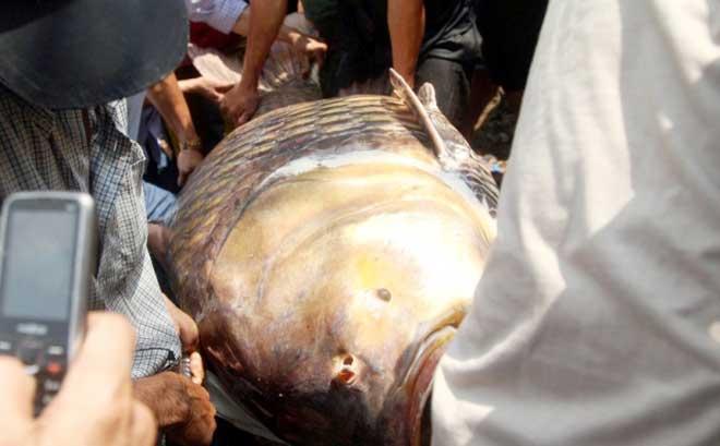 """Theo chân thợ săn cá """"khủng"""", từng 2 lần được lộc trời ban ở Sài Gòn - 20"""