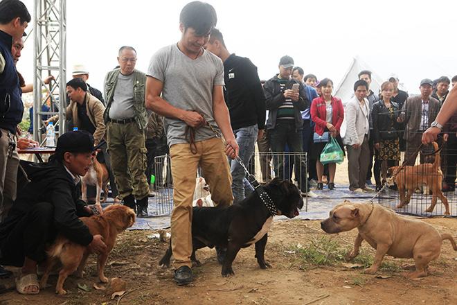 Chó cảnh đua tài, sắc cùng chó nghiệp vụ ở Hà Nội - 1
