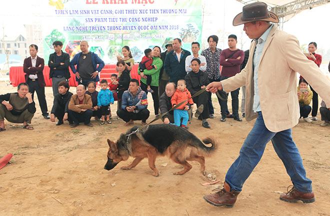 Chó cảnh đua tài, sắc cùng chó nghiệp vụ ở Hà Nội - 4