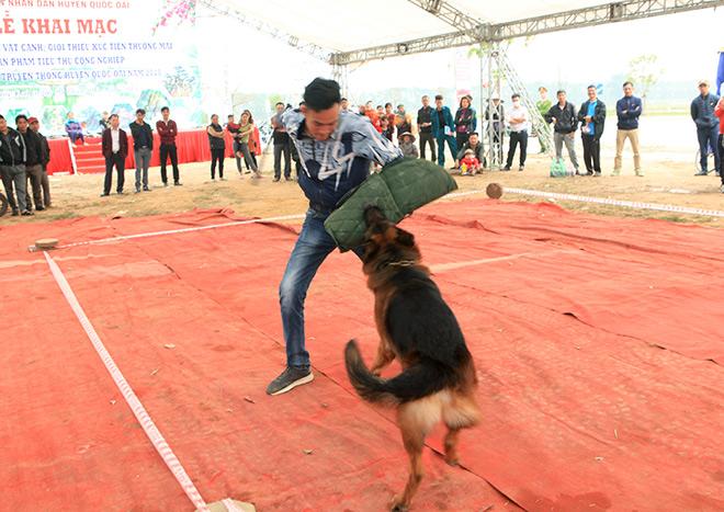 Chó cảnh đua tài, sắc cùng chó nghiệp vụ ở Hà Nội - 5
