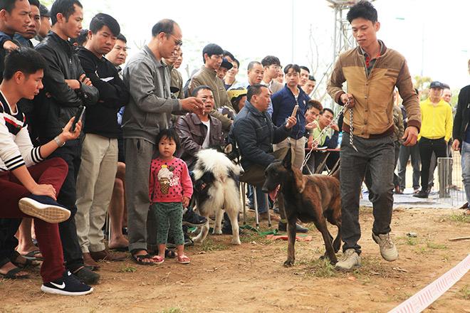 Chó cảnh đua tài, sắc cùng chó nghiệp vụ ở Hà Nội - 8