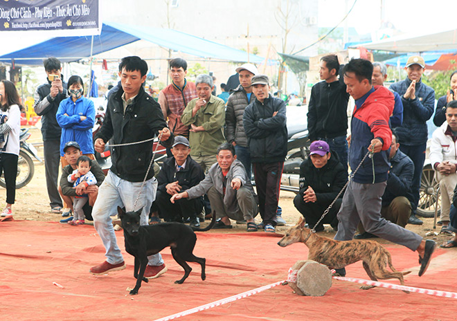 Chó cảnh đua tài, sắc cùng chó nghiệp vụ ở Hà Nội - 6