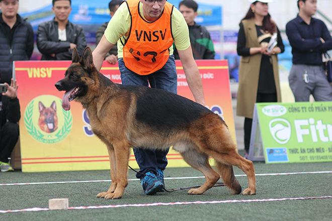 Chó cảnh đua tài, sắc cùng chó nghiệp vụ ở Hà Nội - 14