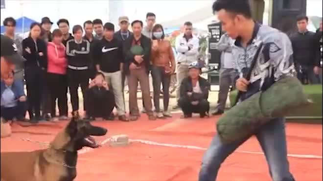 Chó cảnh đua tài, sắc cùng chó nghiệp vụ ở Hà Nội