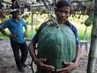 Kỳ lạ: Vùng đất cứ trồng bí đao xuống là có quả to 50kg, 100kg