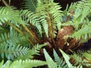 Phát hiện mới trong năm về loại cây mọc hoang giúp khỏe thận, giảm tiểu đêm sau 1 tháng