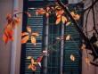 Ngắm Hà Nội đẹp như tranh trong tiết giao mùa tháng 3