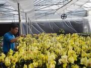 """Nông dân 4.0 trồng lan giữa đất Mỏ,  """" đút túi """"  1,5 tỷ sau vụ hoa Tết"""