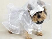 Tiêu tiền kiểu nhà giàu: Chi hơn 3 tỷ để tổ chức đám cưới cho chó cưng