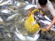 Áp thuế cao với cá tra, Việt Nam yêu cầu Mỹ xem lại