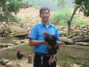Bỏ việc lương thấp, 9X về nuôi gà Đông Tảo, kiếm hơn 30 triệu/tháng