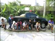 Thái Lan: Bắt trăn khổng lồ dài 7m, nặng 1 tạ nấp trong vườn nhà dân