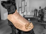 Sốc: Áo dành cho thú cưng của hội nhà giàu có giá đắt ngang... biệt thự