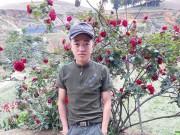 Vụ mất trộm cây hồng cổ 30 triệu đồng: Khổ chủ đành buông xuôi