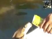 Kì dị cảnh cá trèo lên mạn thuyền uống bia ừng ực