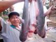 Nỗi oan con cá tra Việt Nam và sự vô lý của Mỹ