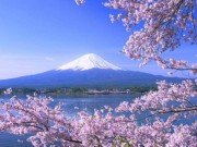 Cơ hội du lịch ngắm hoa anh đào cùng GoBear  & amp; KLOOK