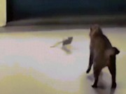 Bị chuột tung sê-ri đòn tấn công phủ đầu, mèo sợ hãi bỏ chạy